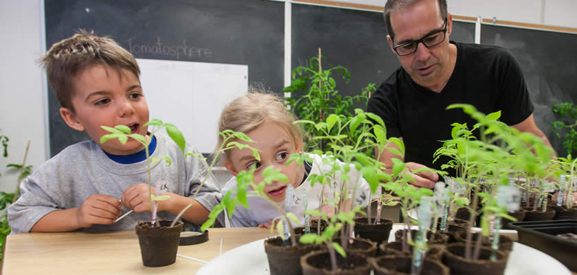 Kids and teacher with tomato plants